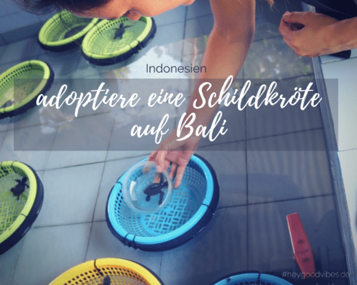 Bali Schildkröte adoptieren