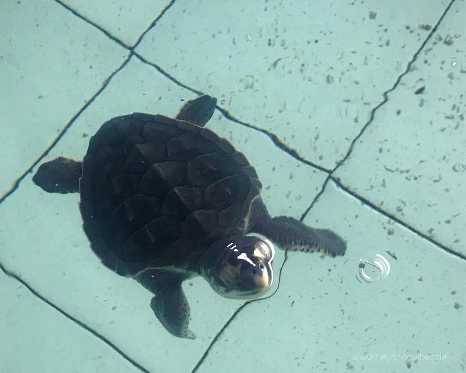 Schildkröten Schutzstation Adoption Bali