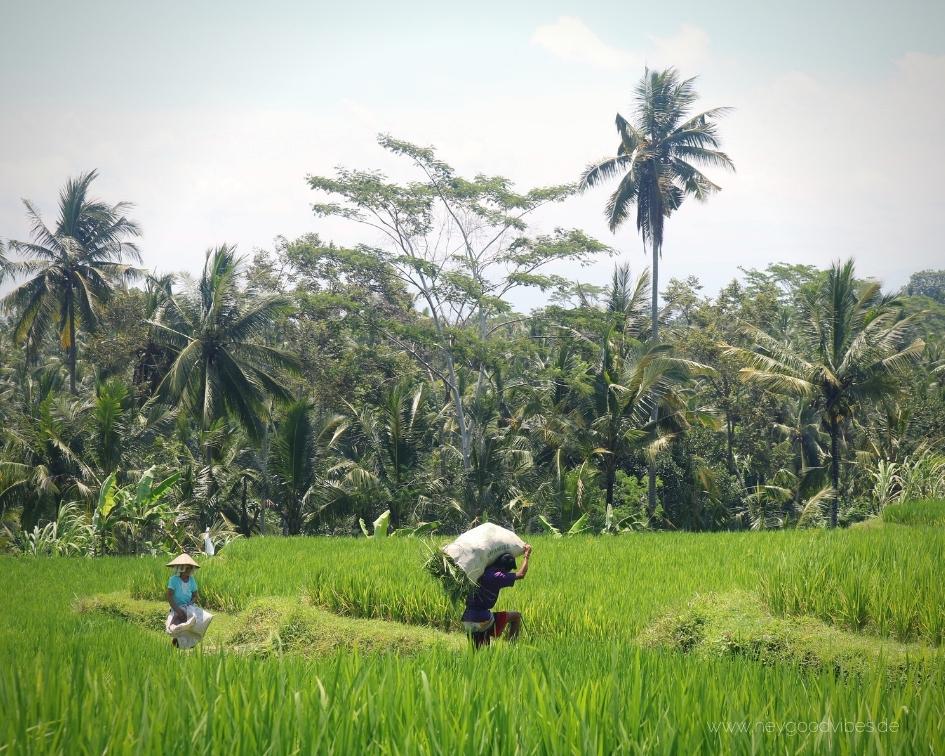 Bali Landschaft